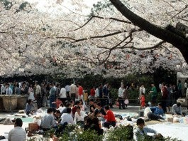 Ueno Park Blossom Party
