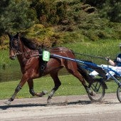 A Rider At The Elitloppet