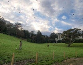 Shooting fowl at Caerhays