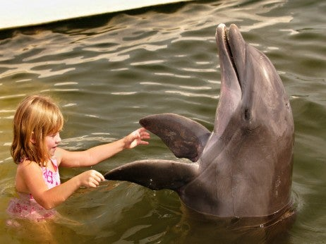 Swimming with Dophins © Bob Krist