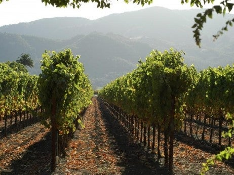 Vineyards Of The Penedes