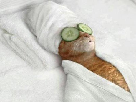 Eden Roc At Cap Cana Purr Fect For Pampered Pets Elite