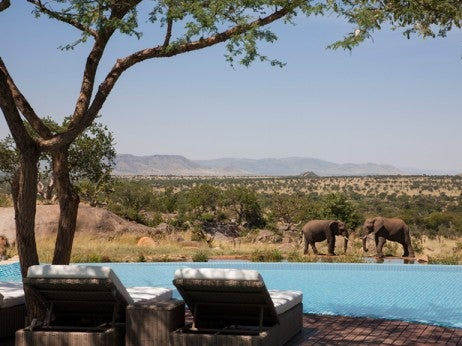 Elephants poolside, Four Seasons Safari Lodge Serengeti