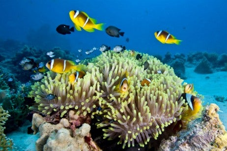 great barrier reef_