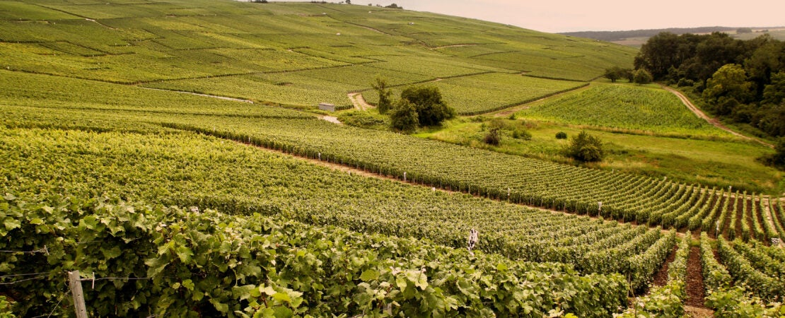 Champagne fields France