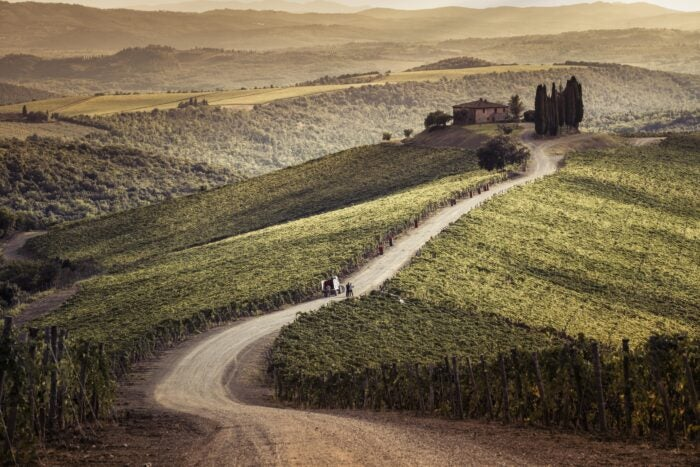 road to capanna vineyard, castiglion del bosco