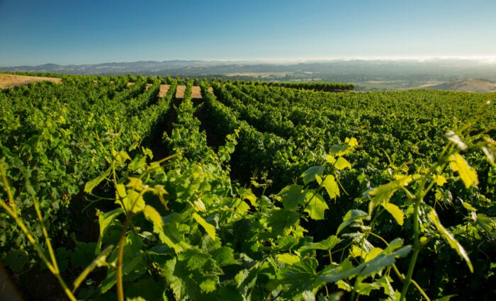 Best wineries in California: the expansive vineyards of Trombetta Family Wines