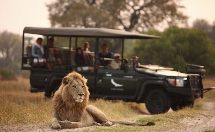Game drive stops to admire lion