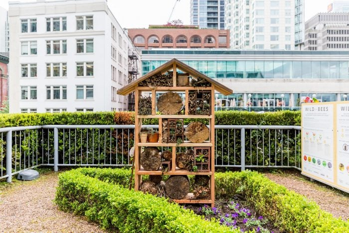 Fairmont Waterfront Bees