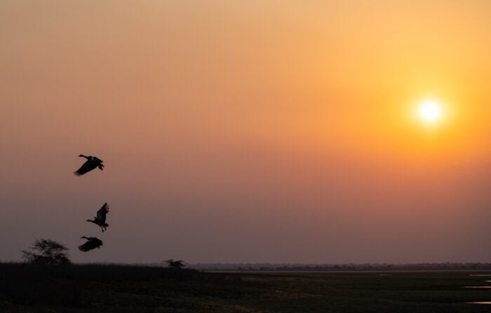 Birds at sunset in Africa