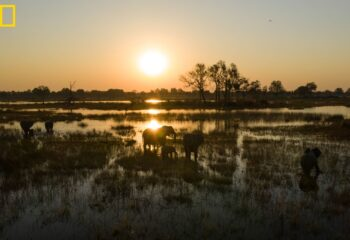 Nationation Geographic and De Beers team up to protect Delta- Picture shows elephants in the delta at sun rise