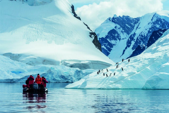 guests watching penguins on ponant cruise tour