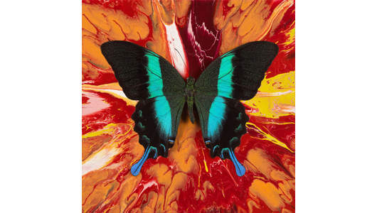 Damien Hirst - Butterfly with household gloss on canvas, 2008, Other Criteria